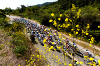 Amgen Tour of California in Monterey with mustard flowers